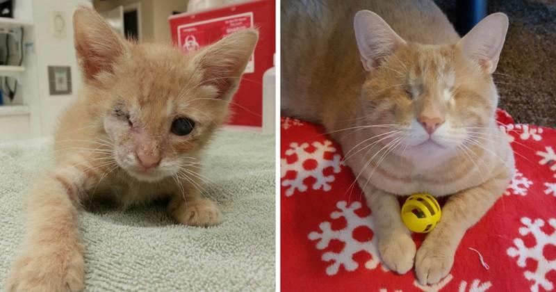 Кот потерял зрение, но нашел любящую семью