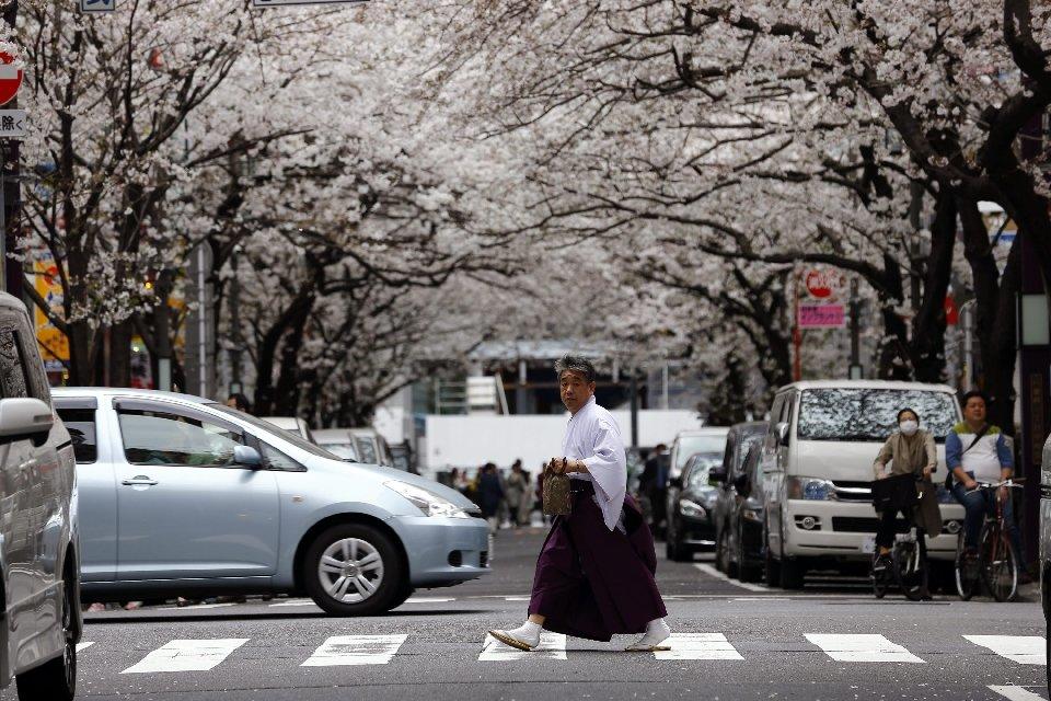 традиция любования цветущей сакурой-10