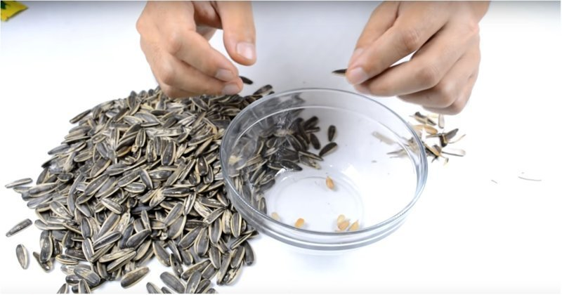 Вот как самому сделать автоматическую чистилку семечек