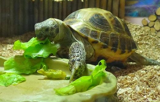 Как лечить черепаху в домашних условиях сухопутную
