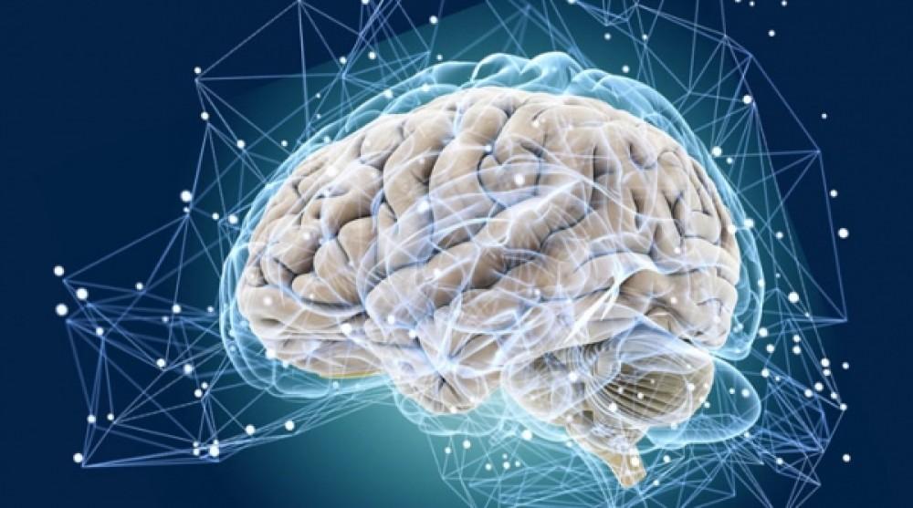 Необычные факты о мозге