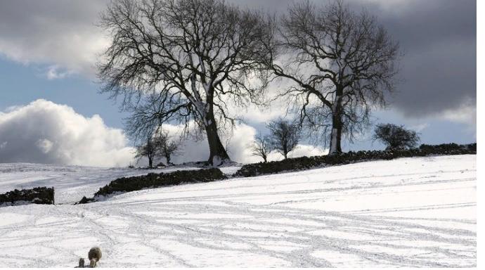 Бабье лето в столице начнется со снегопада и ночных заморозков - синоптики