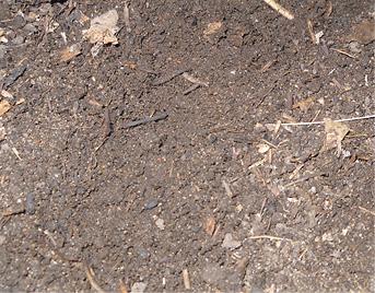 Как сделать землю на огороде мягкой