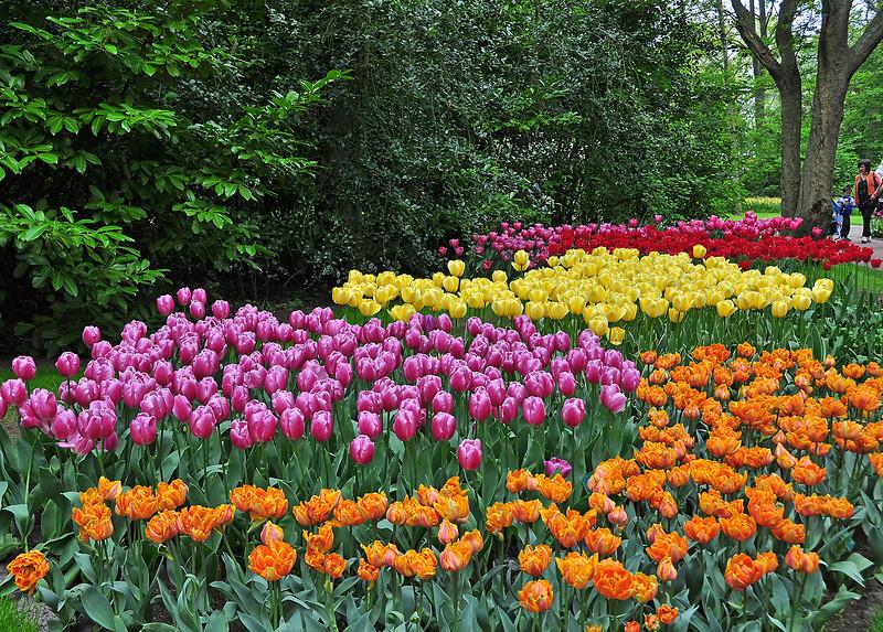 На клумбах разноцветные тюльпаны