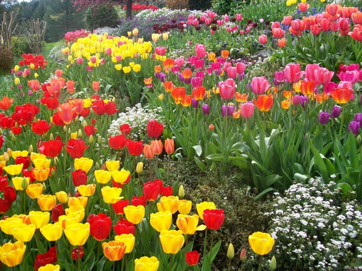 Что такое стратификация семян цветов