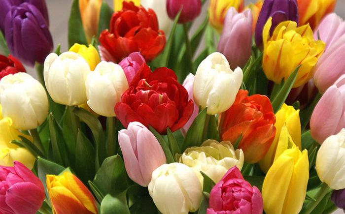 Съедобные цветы, о использовании которых в кулинарии никто и не догадывался