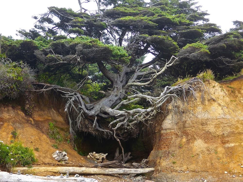 8. Дерево, которое очень хочет жить. люди, мир, удивительные фотографии