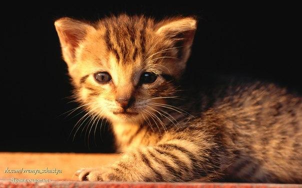"""Продавец одного небольшого магазинчика прикрепил у входа объявление """"Продаются котята"""""""