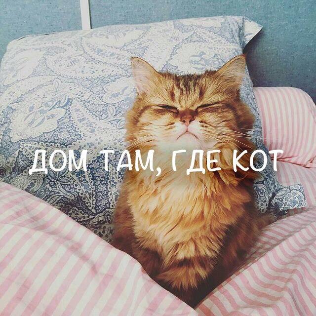 Дом там, где кот!)