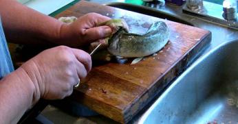 Женщина отрезала рыбе голову и выпотрошила её, но тут произошло нечто поразительное