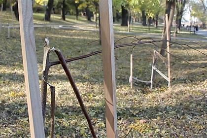 В Одессе уничтожили аллею Небесной сотни