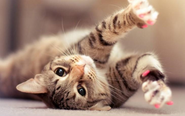 10 жизненных советов от вашего кота