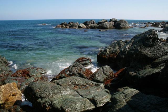 В Охотском море найдены 500 …