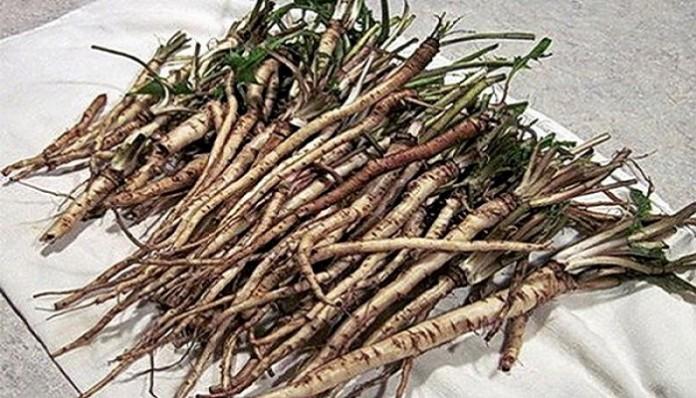 Эффективнее химиотерапии: трава убивает раковые клетки