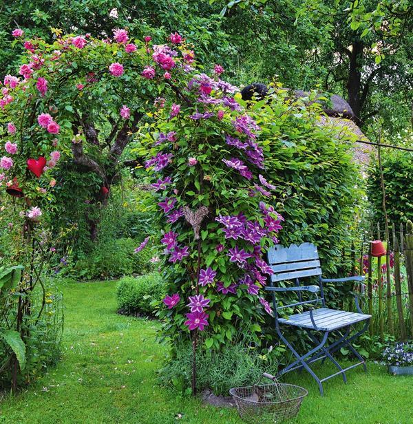 Арку, увитую с одной стороны плетистой розой, с другой - крупноцветковым клематисом, можно использовать для зонирования большого участка.