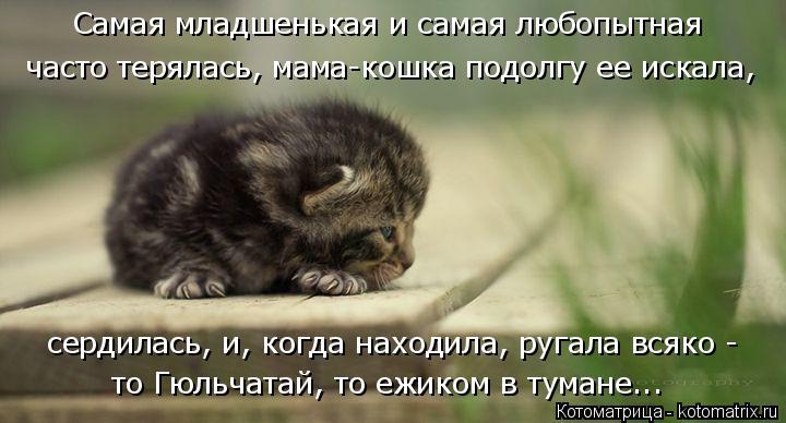 Котоматрица: Самая младшенькая и самая любопытная  часто терялась, мама-кошка подолгу ее искала, сердилась, и, когда находила, ругала всяко -  то Гюльчата