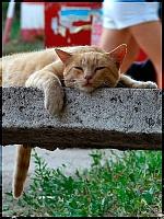 Кошки и Котята 70