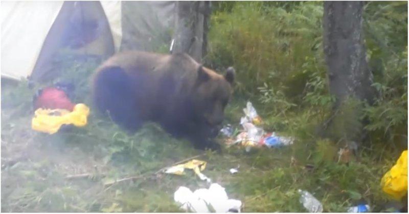 Наглый медведь съел продукты отправившегося в поход сибиряка
