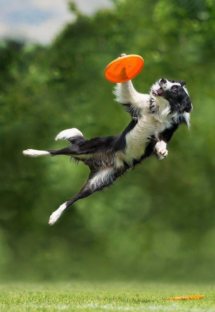 Собаки, летающие и не только...