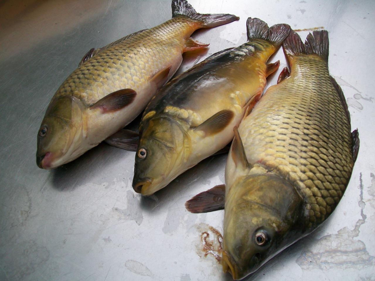 Сказание асов рыбоводов  из жизни