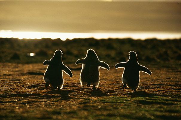 cutest-baby-animals-22__605