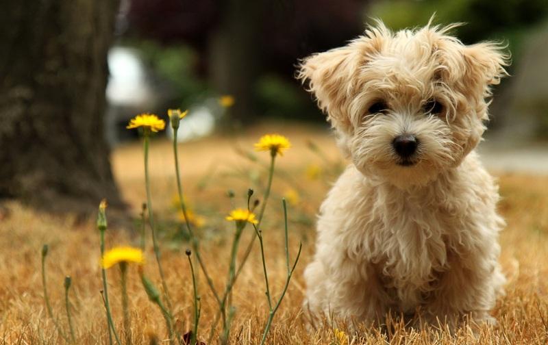 породы маленьких собак с фото и названием и ценой