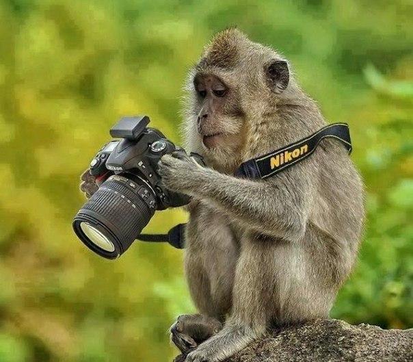 фото животные 3 (604x529, 253Kb)