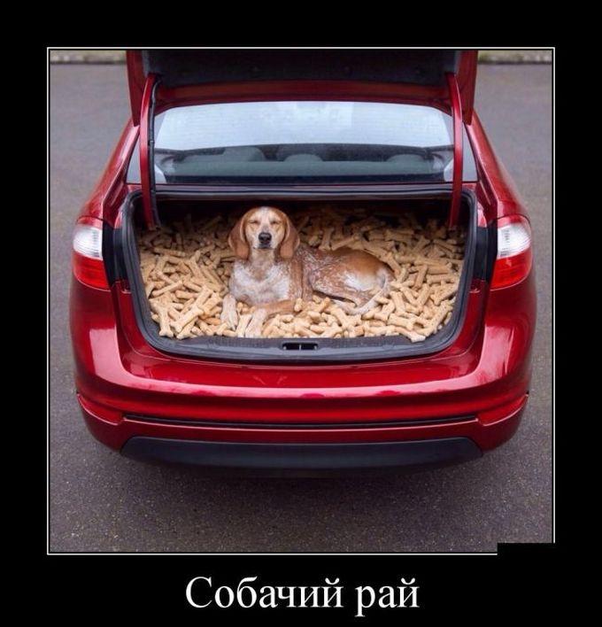 Собачий рай демотиватор, юмор