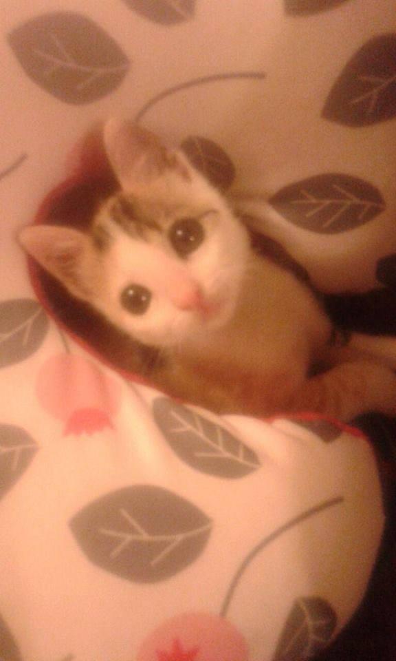 Котёнка вернули к жизни.....