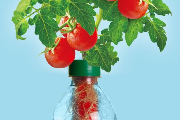 Роскошный огород в пластиковой бутылке