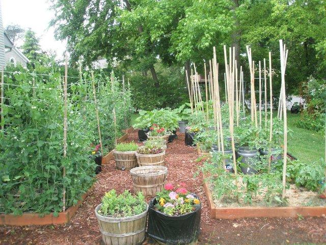 Мой огород (похвастушки) и немного эксперимента