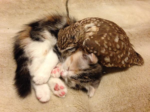 Котенок и совенок - море умиления!