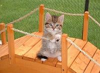 Кошки и Котята 12