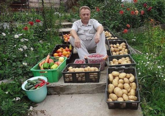 подкормки для огорода Игорь Лядов: Органическое земледелие, пермакультура