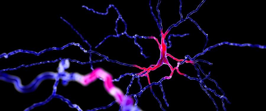 Физические нагрузки помогают создавать новые нейроны