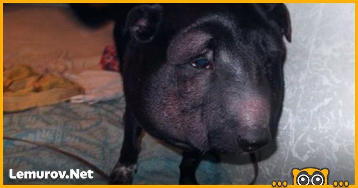 Когда этого пса принесли к ветеринару, врач был в ужасе!