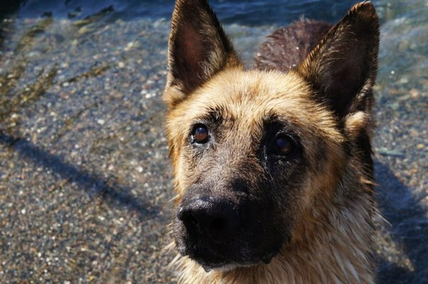 В Абхазии пес два года ждет своего хозяина из Москвы