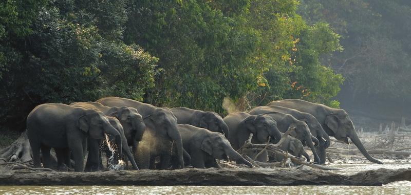 elephant1 Тайский заповедник дикой природы Phu Khieo