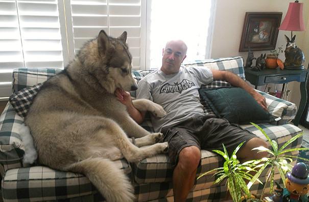 28. Большой друг размер, собака