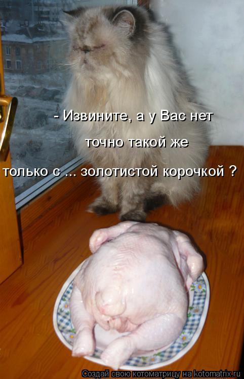 депутатов Совета почему кот сыт сыт на одеяло Вологодской области