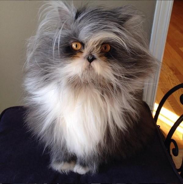 Кот чихун