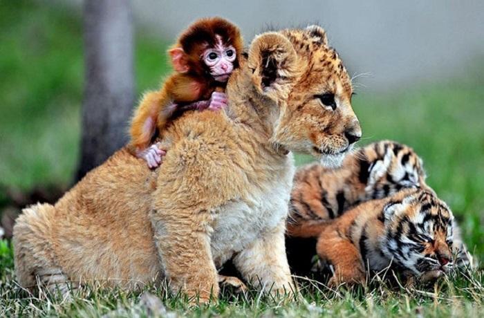 21 самый трогательный пример дружбы среди диких и домашних животных