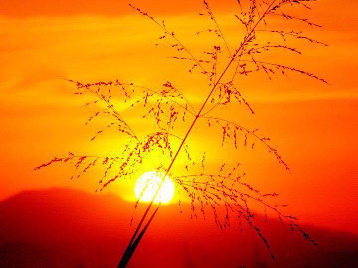 Солнце в ведической астрологии. Часть II