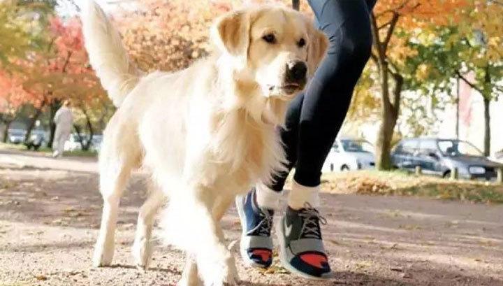 В Кузьминках пройдет марафон в поддержку бездомных собак