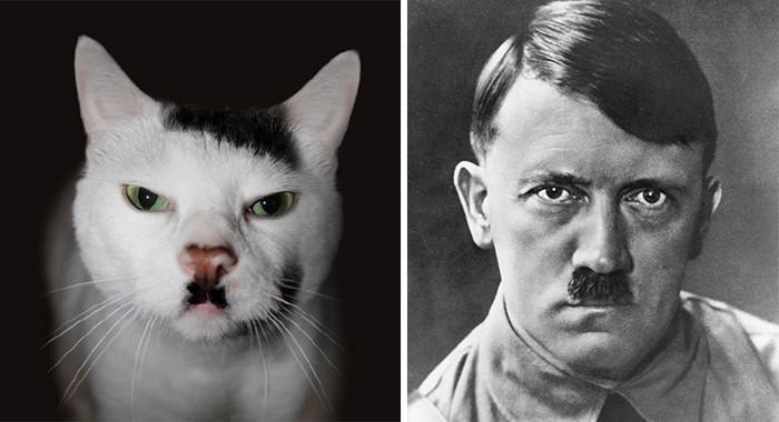 37. Эта кошка выглядит как Гитлер вещи, люди, похожие лица, схожесть