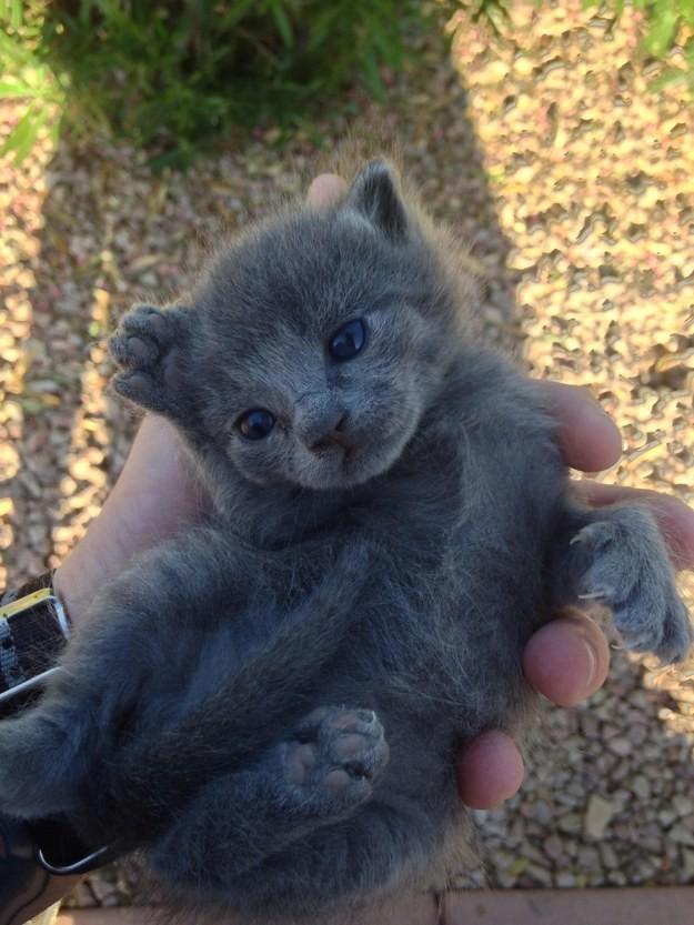 9. У этого крохотного малыша самые милые пяточки в мире. животные, котята, милота