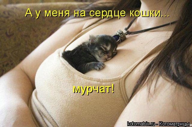 Котоматрица: А у меня на сердце кошки... мурчат!