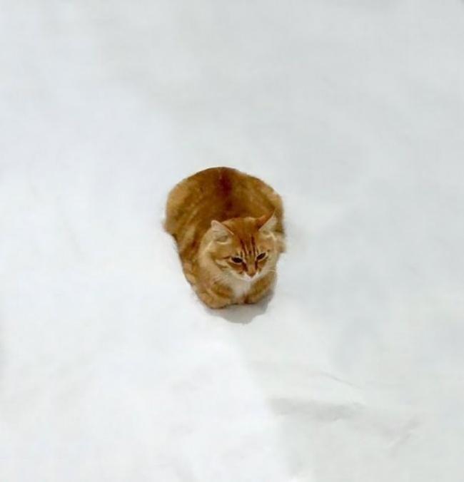 Дорисуй кота: в интернете набирает обороты...