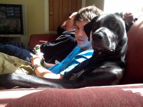 Забавные собаки, которые хотят быть похожими на людей