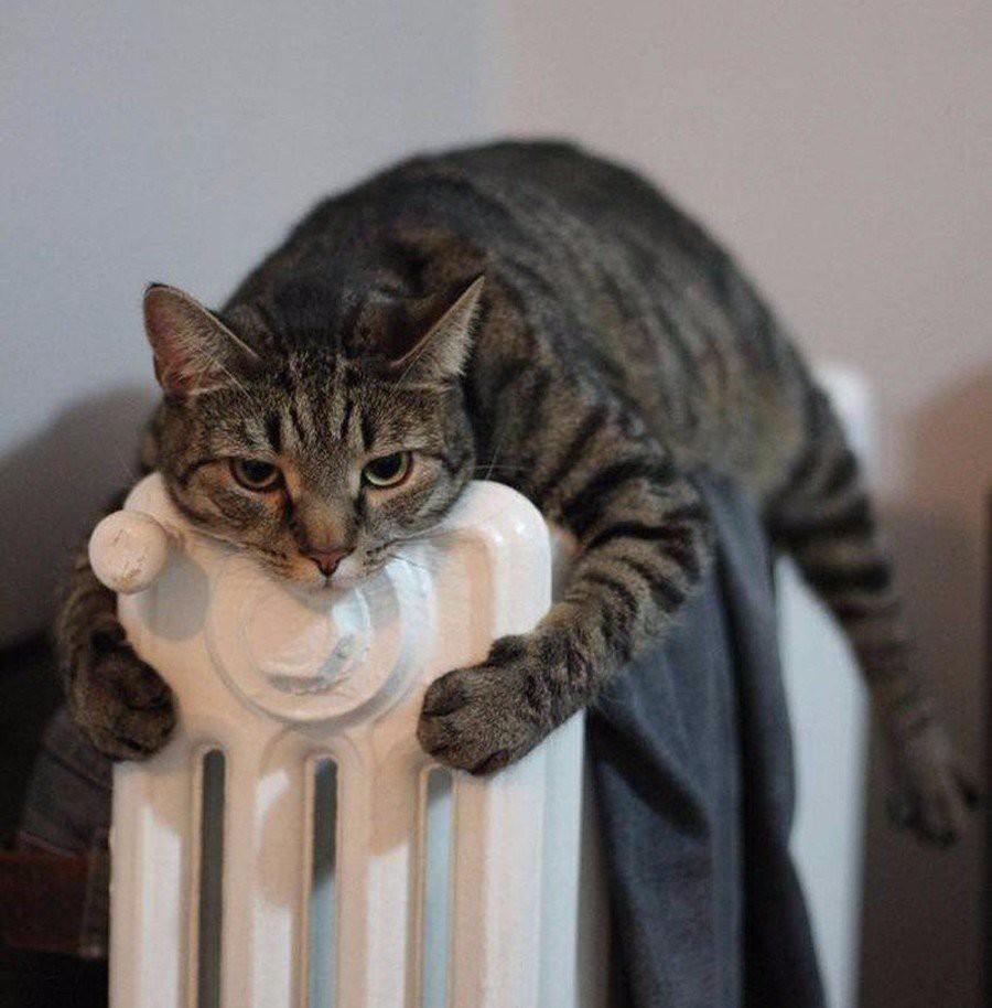 Наступили холода,все мы в поисках тепла..